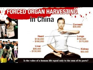 Forced Organ Harvesting in China